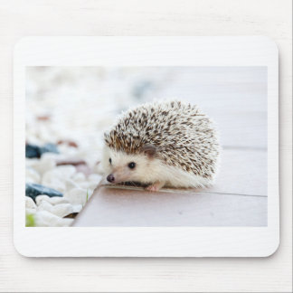 The Cute Baby Hedgehog Mouse Pad