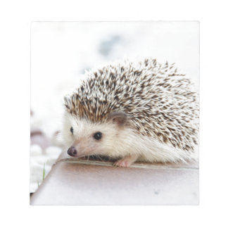 The Cute Baby Hedgehog Notepad