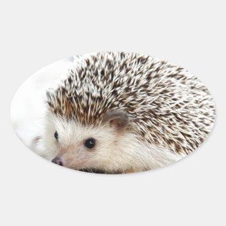 The Cute Baby Hedgehog Oval Sticker