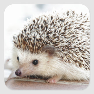 The Cute Baby Hedgehog Square Sticker