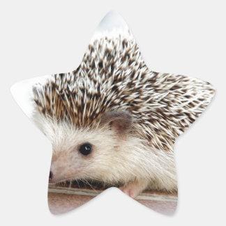 The Cute Baby Hedgehog Star Sticker