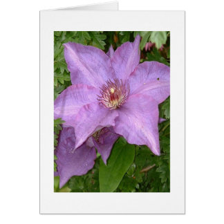 The Cute Clematis notecard