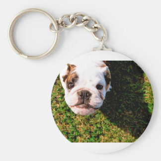 The cutest Bulldog ever!!! Keychain
