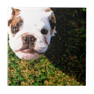 The cutest Bulldog ever!!! Tile