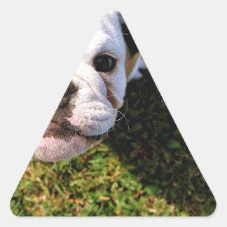 The cutest Bulldog ever!!! Triangle Sticker