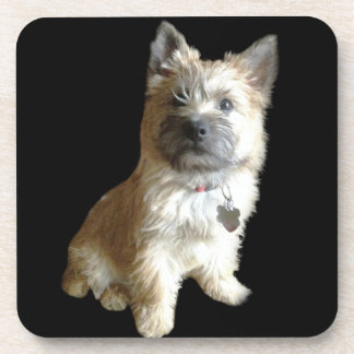The Cutest Cairn Terrier Ever!  Cuter than Toto! Beverage Coaster