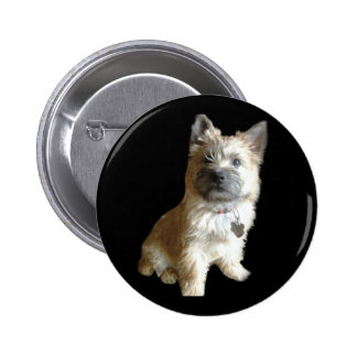 The Cutest Cairn Terrier Ever Cuter than Toto Pinback Buttons