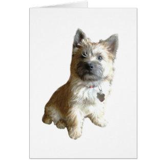The Cutest Cairn Terrier Ever!  Cuter than Toto! Card