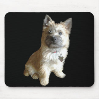 The Cutest Cairn Terrier Ever!  Cuter than Toto! Mousepad