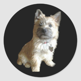 The Cutest Cairn Terrier Ever Cuter than Toto Round Stickers