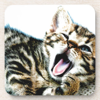 The cutest kitten ever!!! drink coaster