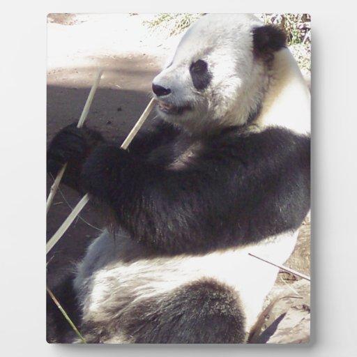 The Cutest Panda, Ever Photo Plaque