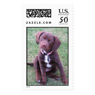 The Cutest Puppy In The World Postage