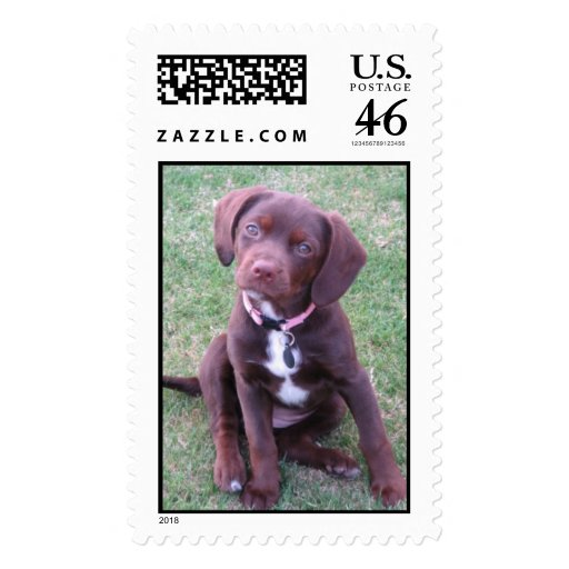 The Cutest Puppy In The World Postage Stamp
