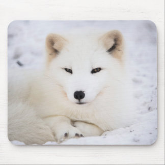 The cutest white polar fox looking at you mouse pad