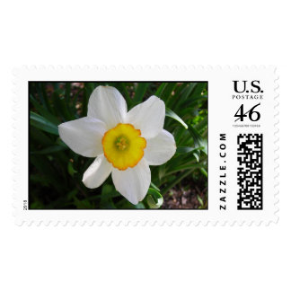 The Daffodil postage