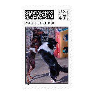 The dancing Doberman Stamp