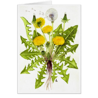 The Dandelion Collection Greeting Cards