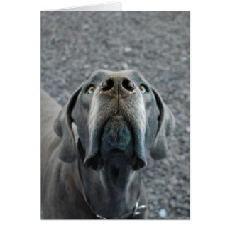 The Dane Nose Greeting Card