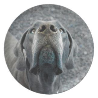 The Dane Nose Melamine Plate