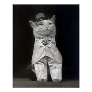 The Dapper Cat, 1906. Vintage Photo Poster