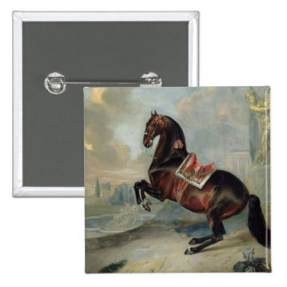 The dark bay horse 'Valido' Pinback Buttons