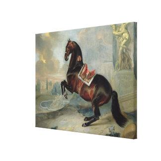 The dark bay horse 'Valido' Canvas Print