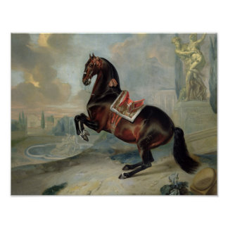 The dark bay horse 'Valido' Poster