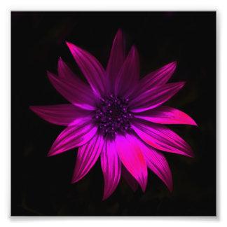 The dark flower -Pink Photograph