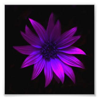 The Dark Flower Print - Purple Photo Art