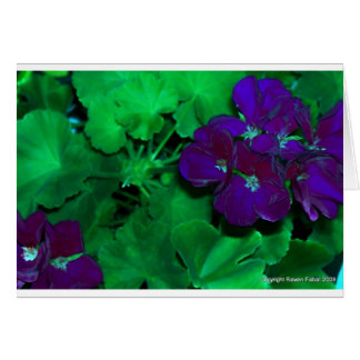 The dark side of geraniums greeting cards