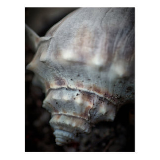 The Dark Whelk Postcard