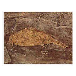 The Dead Bird Postcard