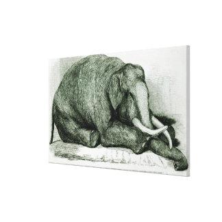 The Dead Elephant Canvas Print