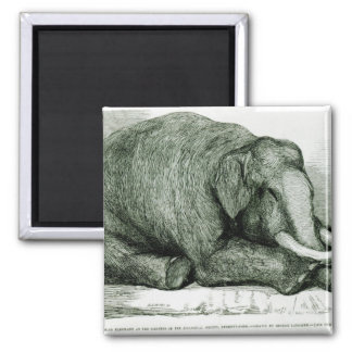 The Dead Elephant Refrigerator Magnets