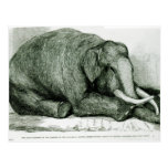 The Dead Elephant Postcard