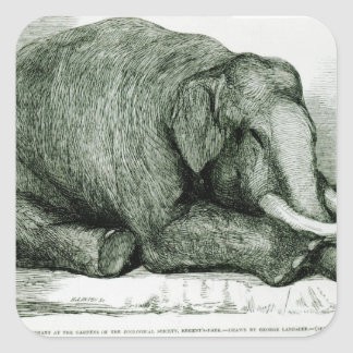 The Dead Elephant Square Sticker