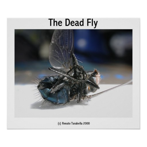 The Dead Fly Poster