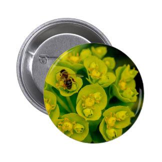 The Desert Gopher Plant Button