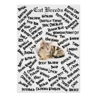 The Different Cat Breeds Poster