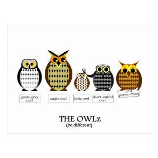The different Owlz Postcard
