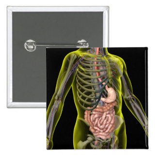 The Digestive System Pinback Button
