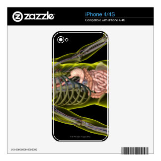 The Digestive System Skin For iPhone 4S