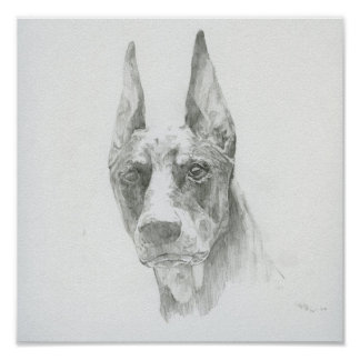 The Doberman drawing print