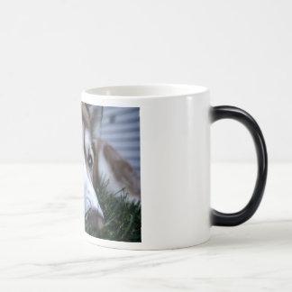 the dog coffee mugs