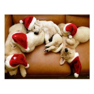 The dog days of Christmas Postcard