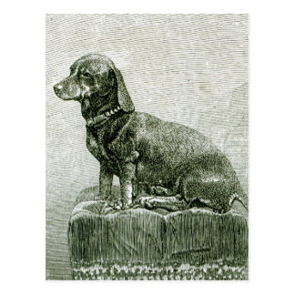 The Dog Jacob Postcard