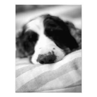The Dog Nose Photo Print