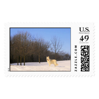 The Dog On The Hill Postage