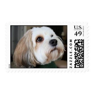 the dog postage